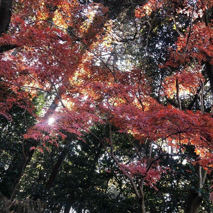 知多市日長の紅葉まつり参加